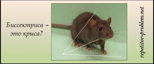 Биссектриса – это крыса?