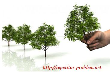 """Задача-головоломка """"Посадка деревьев"""""""